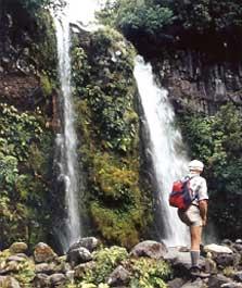Dawson Falls - North Island - New Zealand