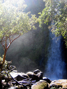 Dawson Falls Track - North Islands - New Zealand