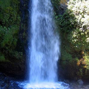 Dawson Falls View - Egmont - Mt Taranaki