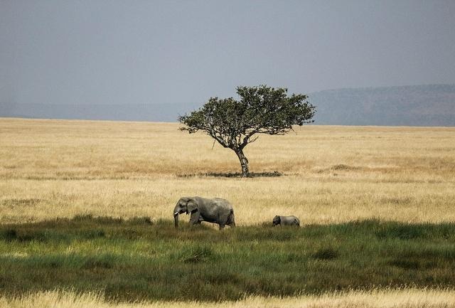 Premium Wildlife And Beach Safari Photos