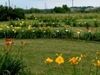 Daylily Garden And Home Wines