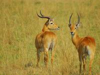 Safari Uganda 9 Days