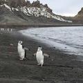 Decepção Atrações ilha turística - Turismo na Antártida