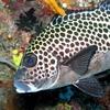 Deepblue Dive Site - Sipadan - Sabah