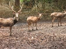 Deer Park Of Nisargdharma