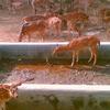 Vedado para los ciervos