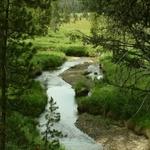 DeLacy Creek
