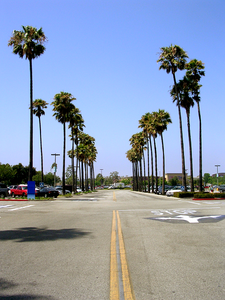 Del Amo Palms
