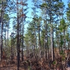 De Soto National Forest