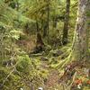 Deweyville Trail