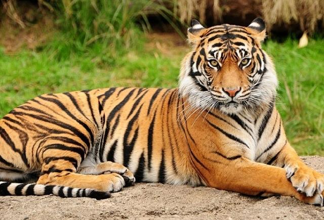 Dhaka Zoo Tour Photos