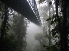 Dirkvd M Canopy Walk