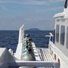 Dive Boat To Apo