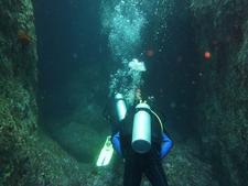 Diver Exploring Poor Knights Diving Site NZ