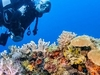 Unforgettable 9 Days 8 Nights Diving Adventure in Ocean Kenya