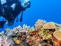 Unforgettable 9 Days 8 Nights Diving Adventure in Ocean Kenya