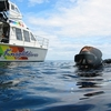 Diving @ Poor Knights Island NZ