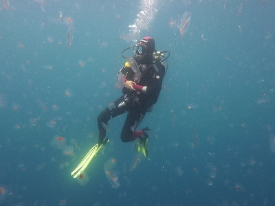 Diving @ Poor Knights Islands Marine Reserve NZ