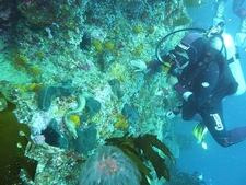 Diving @ Poor Knights Site NZ