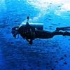 Diving Under Barracuda Point At Sipadan