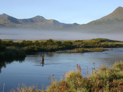 Dog Salmon River Alaska
