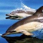 Dolphin 06 10 10