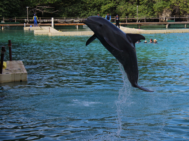 Dolphin Cove Ocho Rios Tour from Ocho Rios Photos