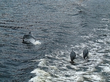 Dolphins @ Doubtful Sound - Southland NZ