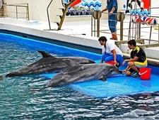 Dolphins Performing In Constanta Dolphinarium