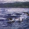 Dolphin-tours.