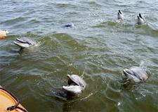 Dolphin-tour.