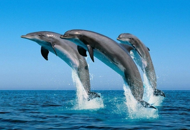 Discover Oman With Dolphin And Snorkeling Photos