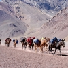 Donkey Train Hiking Mount Aconcagua - Argentina