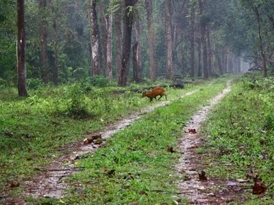 Dooars-West-Bengal
