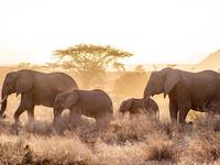 9 Days Adventure Safari