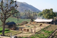 Barn At A Pushkar Farm