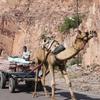 Camel Cart At Mehrangarh Fort