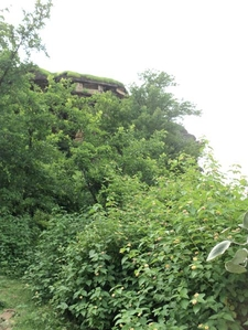 Shrubbery Around The Hill Containing Udaygiri Caves