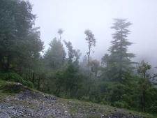 Deodar Forests & Steep Climbs