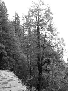 Scenic Views Along Landour Trail