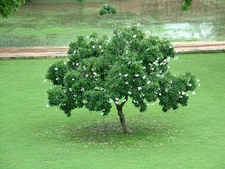 Blooming Garden Tree At Humayun's Tomb
