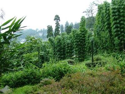 Lloyd's Botanical Garden - Darjeeling