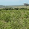 Masai Mara Grassland