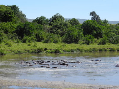 Keekorok Hippo Pool View