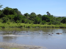 Hippo Pool - Keekorok Lodge