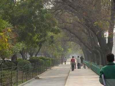 Footpath Shaded With Tree Line