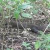 Napping Dragon Along The Trail