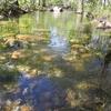 Pools Along Shady Trail