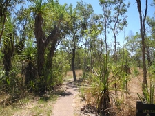 Florence Creek Trail - Litchfield NP