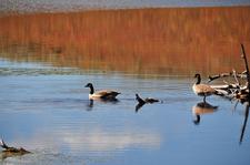 Duck Lake Trail - Yellowstone - USA